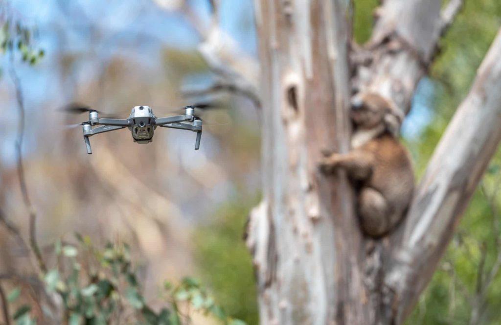How Drones Are Saving Koalas Injured In Australia's Bushfires